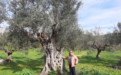 Huile d'olive EHTL