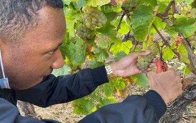 À la découverte des vignobles